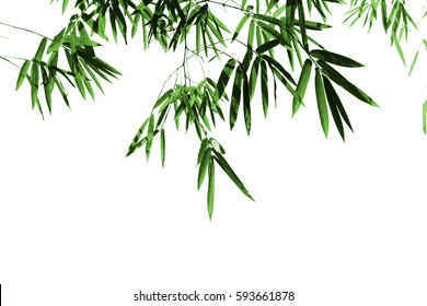 Abstract background of colorful bamboo leaves on white background.