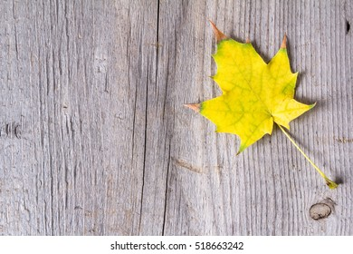 Abstract background of colourful autumn leaves