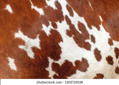 Abstract background of the cow skin