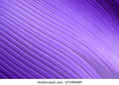 Abstract background with diagonal lines and textures on violet palm leaves