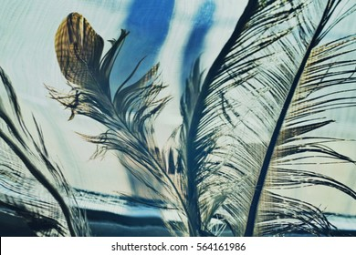 Abstract background with eagle feathers