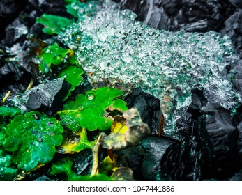 Abstract background. Fluorescent green herb. Close up of the melting snow. Soil with black coal. The beginning of spring.