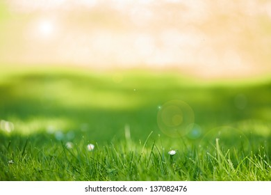 Abstract background with grass and sunlight gleaming through trees
