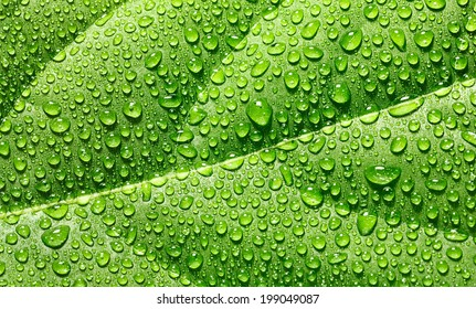 Abstract background of green leaf strewed with fresh rain drops