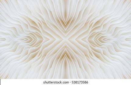 abstract background macro image of Sajor-caju Mushroom
