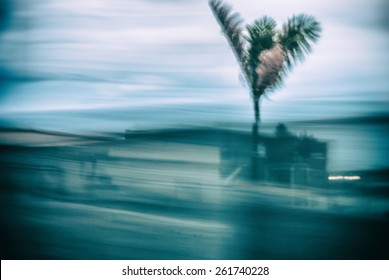 Abstract background motion blur palm leaves in motion during hurricane   Climate weather catastrophe tropical thunderstorm cyclone, image with green tree on Miami Beach in Florida USA