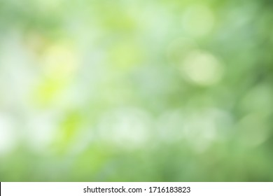 Abstract background from natural Bokeh for the celebration of the holiday season, Mix of white with green with orange and yellow circle