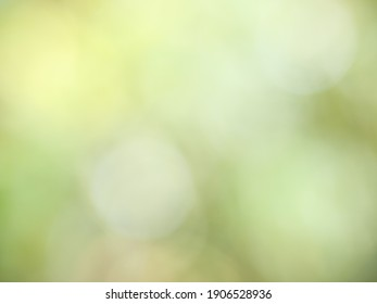 Abstract background from natural Bokeh for the celebration of the holiday season, Mix of white with green and yellow circle