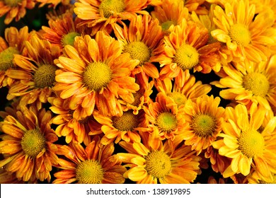 Abstract background of orange flowers