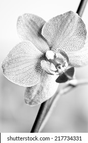 Abstract background with orchid