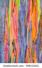 Abstract background pattern of colorful image form Rainbow Eucalyptus tree bark.