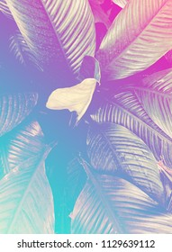 Abstract background picture of tropical jungle-style leaves with a pastel gradient