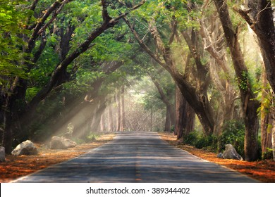 Abstract background of route and journey amidst the big tree and beautiful nature