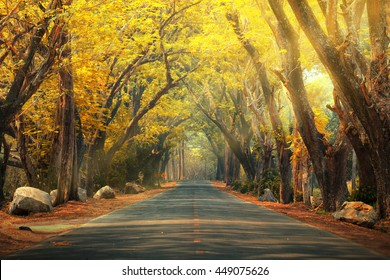 Abstract background of route and journey amidst the big tree and beautiful nature is a beautiful locations and is a very popular for photographer and tourists .Traveling and journey Concept.
