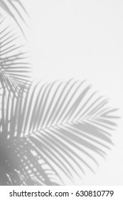 abstract background of shadow palm leaves on wall. White and Black.