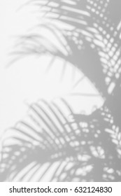 abstract background of shadow palm leaves on wall. White and Black
