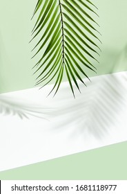 Abstract background of shadows palm leafs on green wall and white floor. Creative summer minimal mock-up. Tropical palm tree. Hipster mockup on light backdrop. Geometric background.