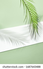 Abstract background of shadows palm leafs on green wall and white floor. Creative summer minimal mock-up. Flat lay, top view. Tropical leaves. Fashion summer photo. Jungle palm leaves.