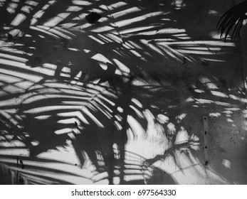 Abstract background of shadows palnt leaves on a white wall. White and Black
