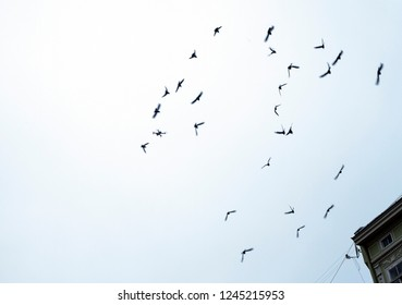 Abstract background with silhouettes of flying birds in sky and copy space. Attack on copter. Copter and pigeons