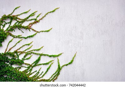 abstract background with stone wall and ivy on it