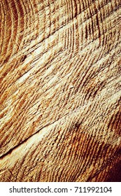 abstract background or texture  detail of cut wood