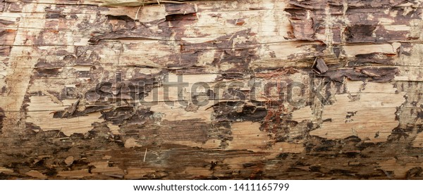 Abstract Background Texture Detail of A Wooden Log with splinters and grunge.