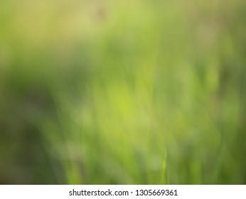 Abstract background and texture of green nature on grass filed in the morning with blurred vission