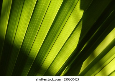 Abstract background texture. Green palm leaves in the jungle, backlit by the sun. Light and shadow, glowing green.