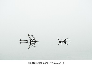 Abstract Background texture with light natural  background in black and white.