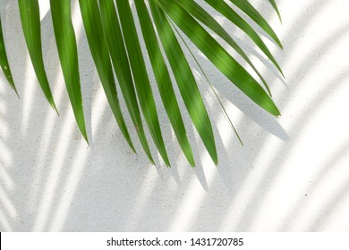 abstract background texture of shadows palm leaves on a concrete wall