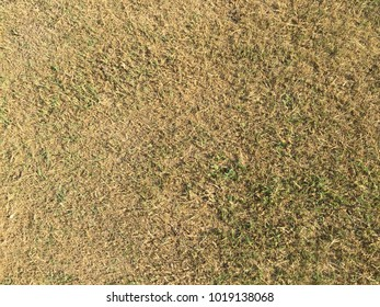 Abstract background texture or wallpaper of zooming closeup top view of sundries brownish or yellowish grass field under strong sunlight in a countryside yard