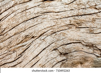 Abstract background texture of weathered beach driftwood