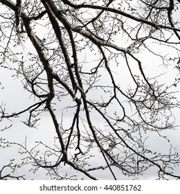 Abstract background with tree branches silhouette