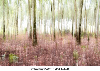 Abstract background of trees and undergrowth in sunlight. Painterly in-camera move up blur of trunks of trees and bright green vegetation.