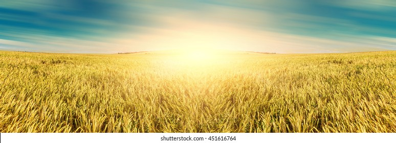 abstract background. Wheat field. golden ears of wheat or rye on fantastic sky background. Rich harvest Concept. majestic fantastic rural landscape. Copy space installation of sunlight on the horizon.