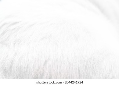 abstract background of white cat fur