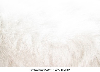 abstract background of white cat fur-image