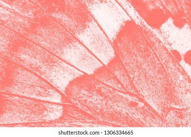 abstract background, wing of butterfly closeup, living coral tone
