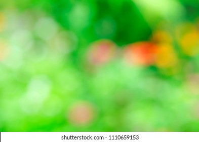 Abstract backgrounds with bokeh lights on flower in the nature