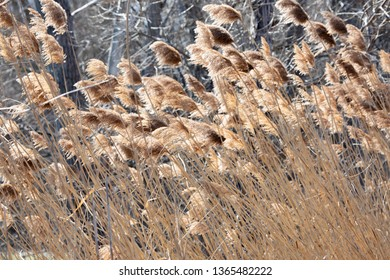 Abstract Backgrounds Conservation Spring Afternoon Brown Tall Grass