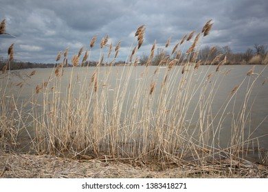 Abstract Backgrounds Conservation Spring Afternoon Brown Tall Grass Single Head