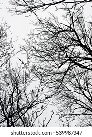 Abstract bare tree branches