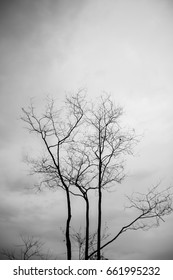 Abstract bare tree branches , black and white