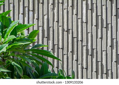 Abstract beautiful background for design with green decorative plant Ficus Alii (Ficus maclellandii) against the grey relievo concrete wall with vertical seamless pattern