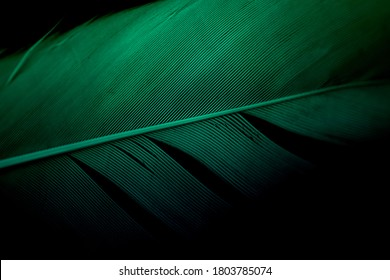 Abstract, Beautiful feather shape, Macro photo of dark green feather texture line on black background.