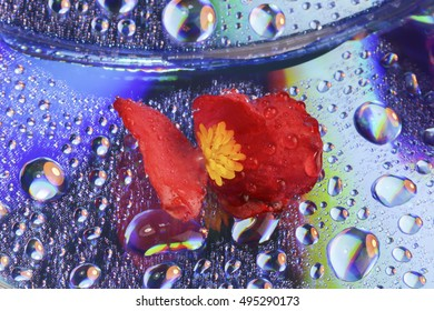 Abstract beautiful flower with water drops for background