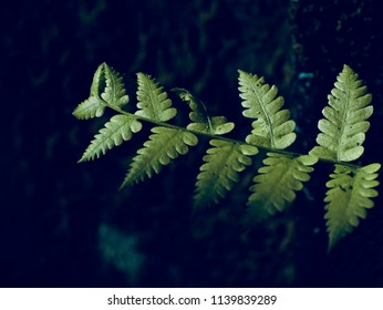 Abstract beautiful green leaves of a plant isolated blurry unique photo