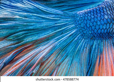 abstract beautiful tail of fish