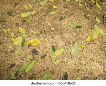 Abstract beautiful textured and background of wet floor, leaves lay on land after rain. Colorful of leaves stack on wet sand ground. No subject, without selective object